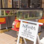 大和郡山(金魚の町)